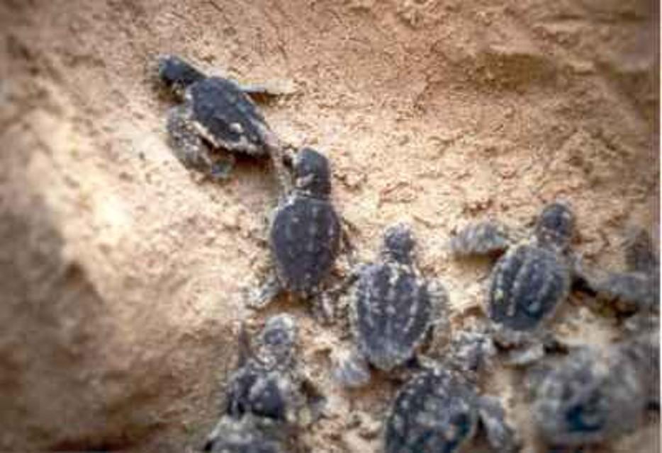 Deposte e nate tartarughe a lampedusa residence lampedusa for Piccoli disegni di casa sulla spiaggia